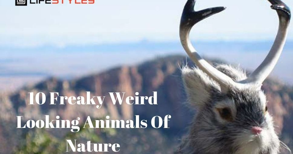 10 Freaky Weird Looking Animals Of Nature
