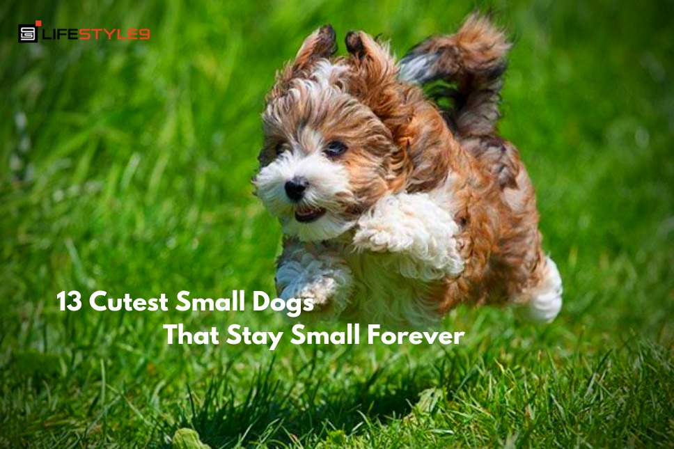 13 Cutest Small Dogs That Stay