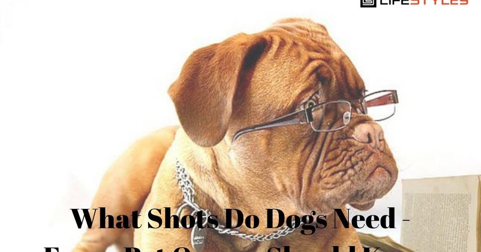 What Shots Do Dogs Need - Every Pet Owner Should Know