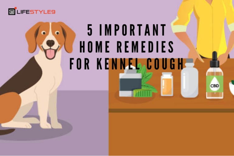 5 Important Home Remedies For Kennel Cough